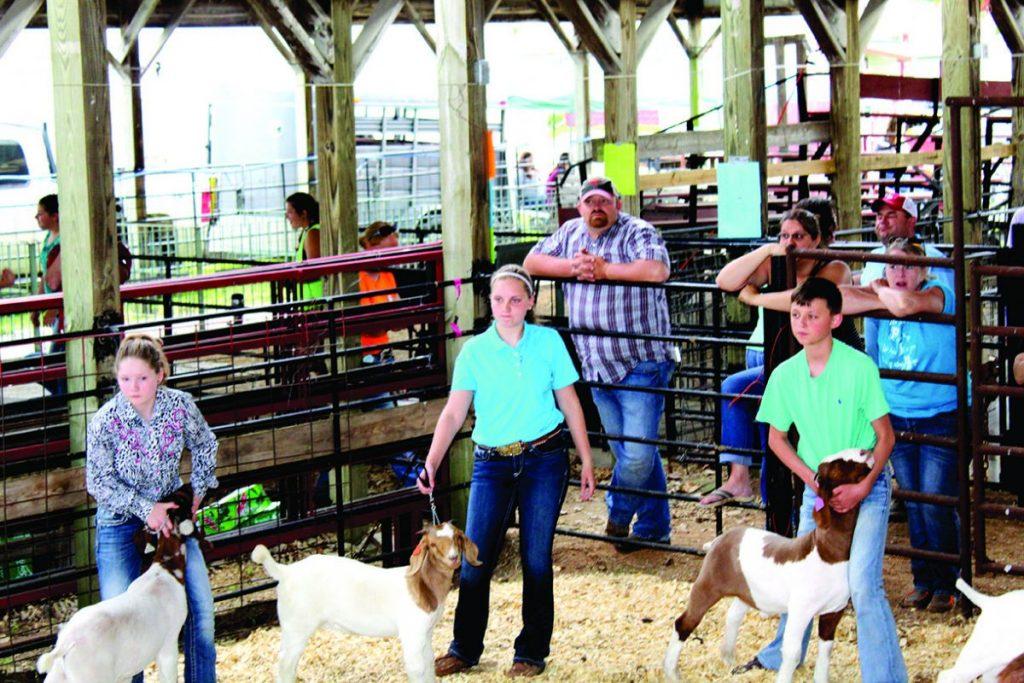 Jackpot Lamb, Goat Show Goat Competition