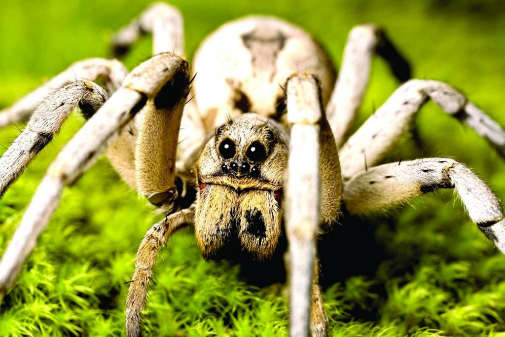 ter-insects-wolf-spider-article-4